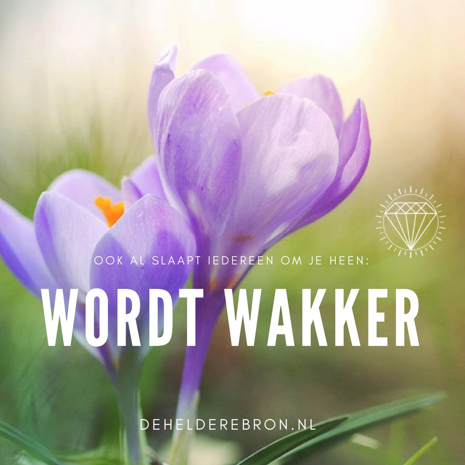 WORDT WAKKER